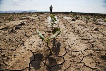 Severe Drought Effecting Robusta in Vietnam
