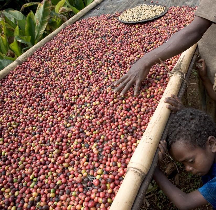 Coffeebi (coffee business intelligence) - russia bans coffee from uganda