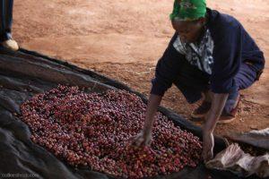 Kenya-Tegu-coffee-mill