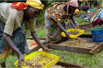 Rwanda-to-increase-coffee-production