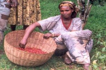 Coffee Growers Benefit $10M from Bloomberg Philanthropies