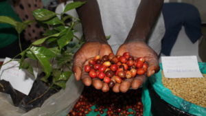 coffee-beans-300x169