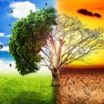 climate-change-trees-copertina