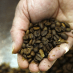 intergastra coffee beans into the hand