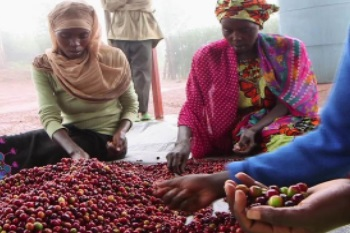 Rwanda is building a local coffee culture