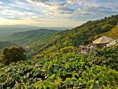 Colombian Coffee Region