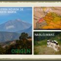 Santa Marta Golden, 100% Organic Coffee, arabigo, Sierra Nevada Colombia,
